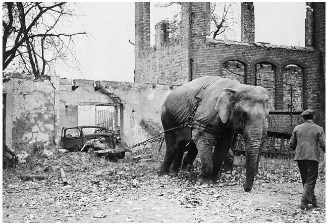 CIRCUS ELEPHANTS USED IN WWII FOR HAULING AFTER BOMBING RAIDS